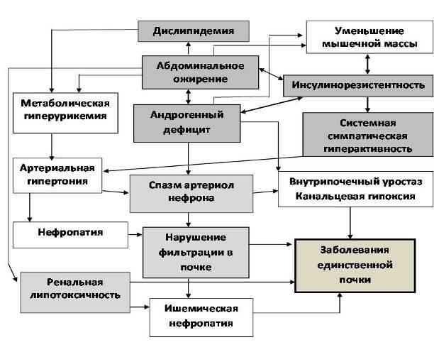 Схема современного патогенеза