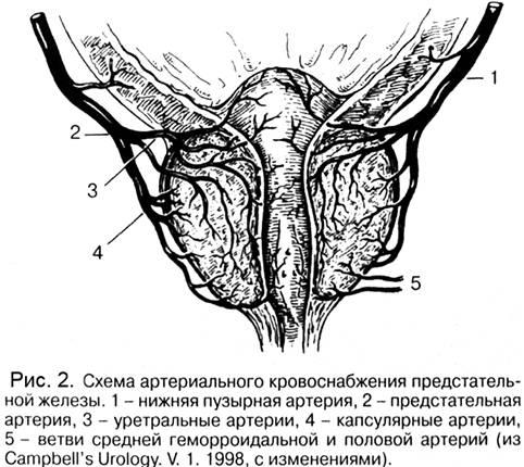 Аденома предстательной железы маркеры