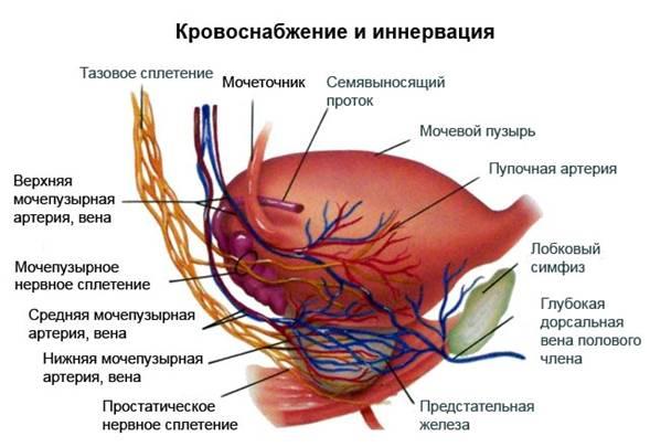Prostatitis vezikulita