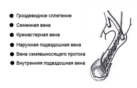 Фокальное изменение паренхимы предстательной железы(рубец,киста)